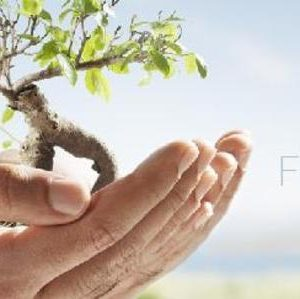 """Hands holding a tree """"The Franchise"""""""