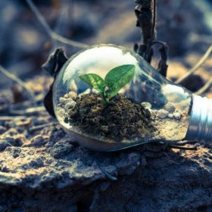 Alternative Energy Opportunities in the Green Business Movement